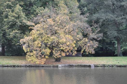 Trees by Lake #64019