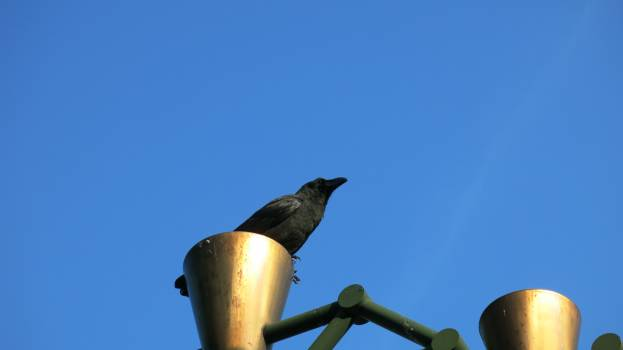 Low Angle View of Bird Perching Against Clear Sky Free Photo