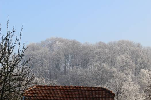 Low Angle View of Bare Trees Against Clear Sky #64067