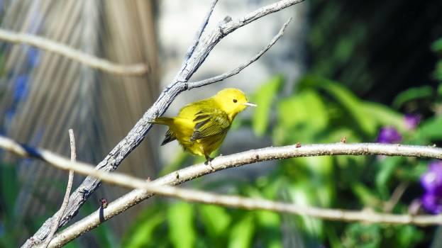 Close-up of Bird Perching on Yellow Flower Free Photo