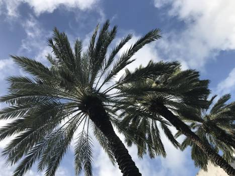 Low Angle View of Palm Tree Against Sky #64426