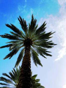 Low Angle View of Palm Tree Against Sky #64427