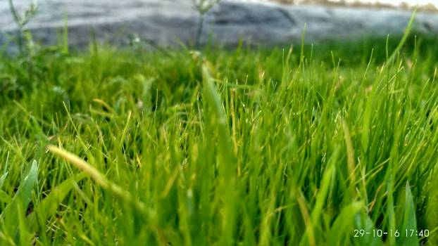 Close-up of Grass in Field Free Photo