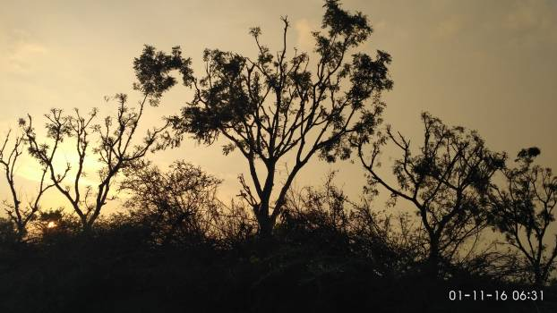 Silhouette Trees Against Sky during Sunset #64488