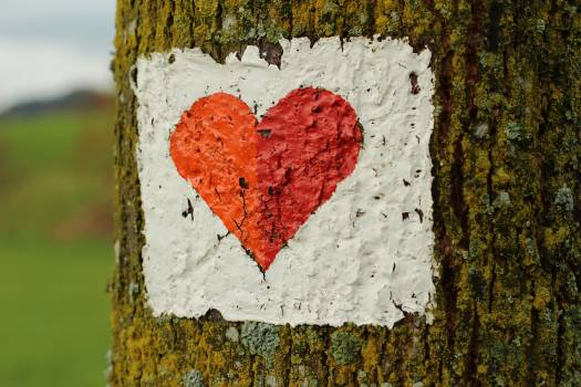 Close-up of Heart Shape on Tree Trunk Free Photo