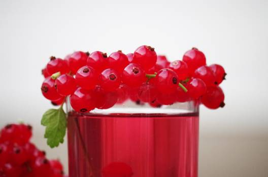 Close-up of Red Flowers over White Background Free Photo