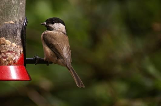 Close-up of Bird Perching Outdoors Free Photo
