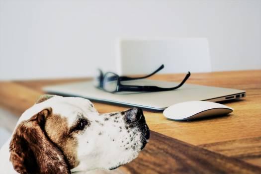 Close-up of Dog Free Photo