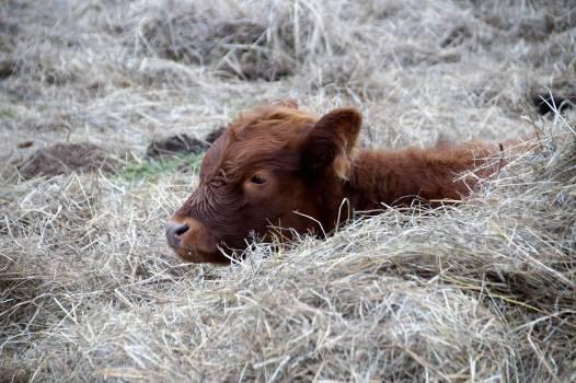 Sheep on Grass #65903