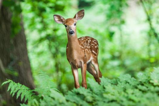 Portrait of Deer Standing in Grass Free Photo