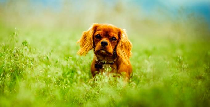 Dog on Grass #65939