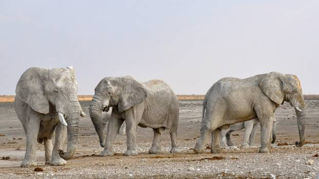 Side View of Elephant in a Row Against the Sky Free Photo
