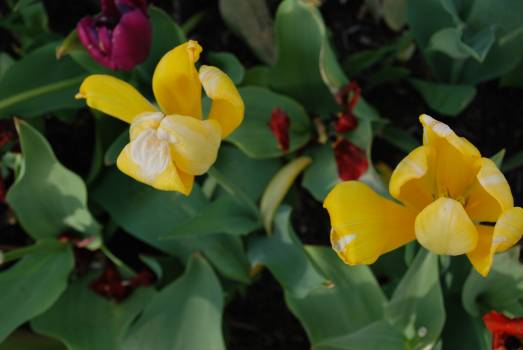 Close-up of Yellow Flowers Blooming Outdoors Free Photo