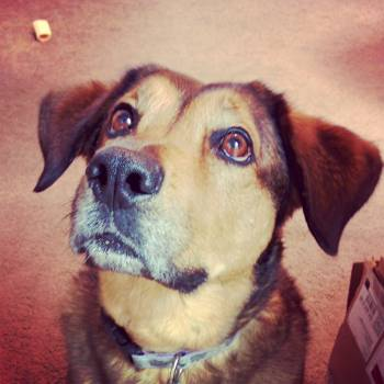 Close-up Portrait of Dog #65964