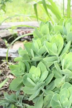 Close-up of Fresh Green Plants Free Photo