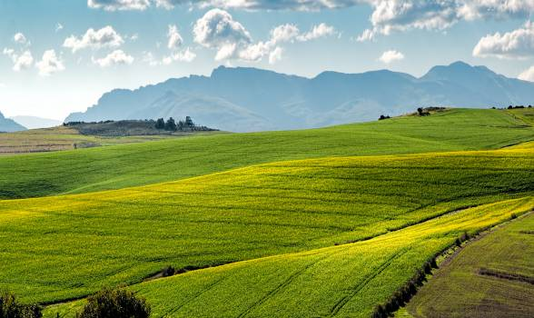 Agriculture countryside crop cropland Free Photo