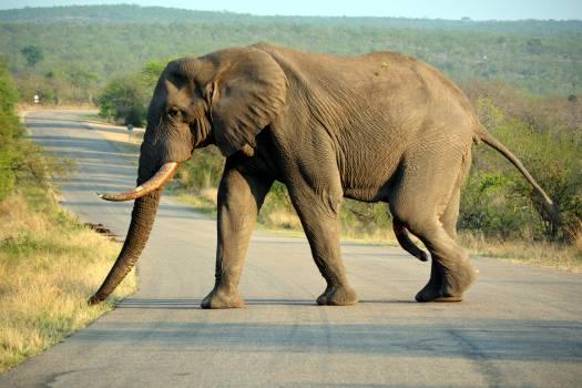 Kruger park safari south africa Free Photo