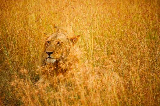 Africa animal camouflaged country Free Photo