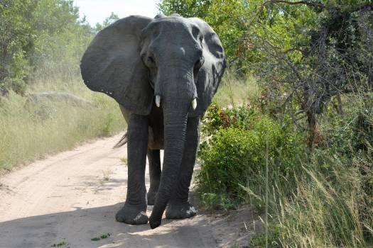 Africa elephant national park Free Photo