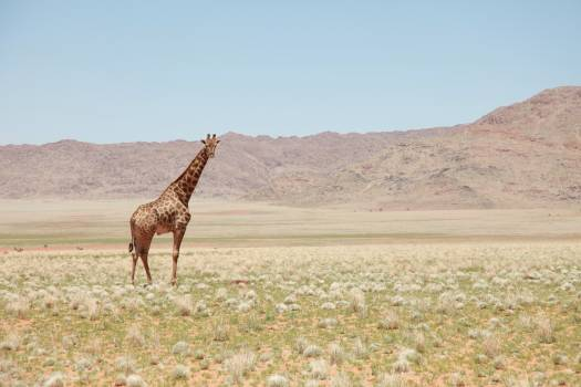 Africa arid bushes daylight Free Photo