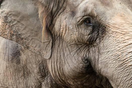 Africa animal animals elephant Free Photo