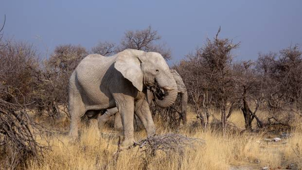 Africa animals botswana drought Free Photo