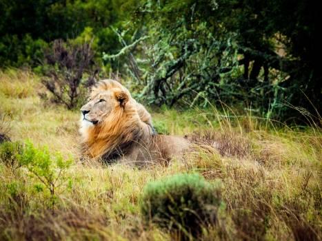 Animal animal photography big cat blur #67718