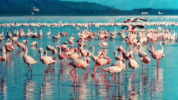 Africa animal birds kenya Free Photo