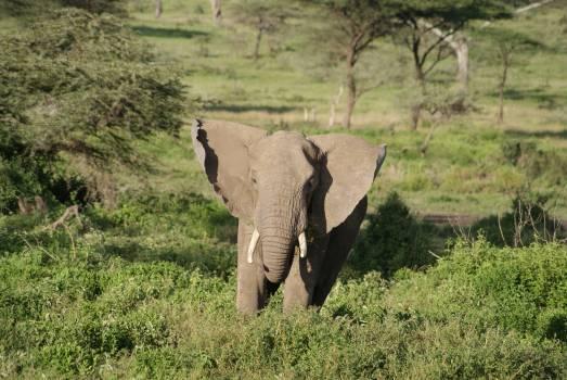 Africa animal elephant Free Photo
