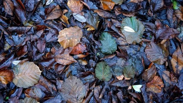 Foliage leaves wet Free Photo