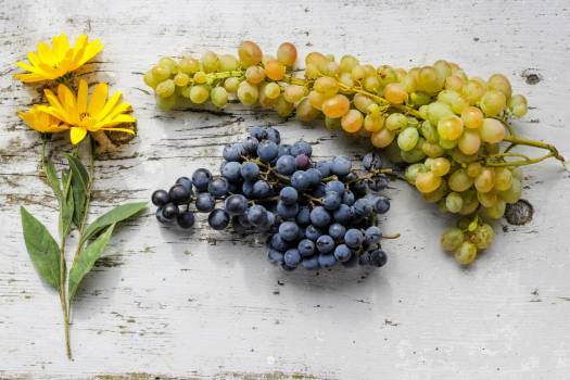 Fruit Grape Food Free Photo
