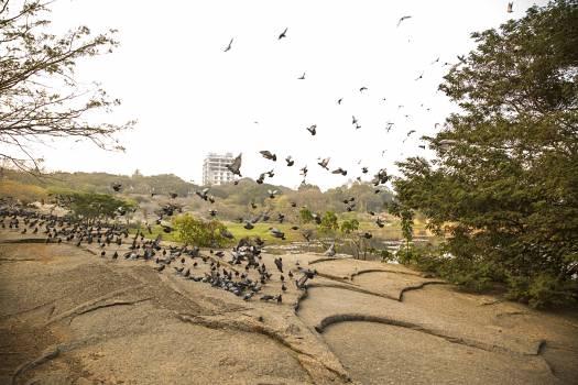 Lalbagh botanical garden bengaluru #68339
