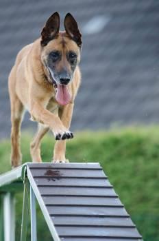 Agility animal blur canine #68590
