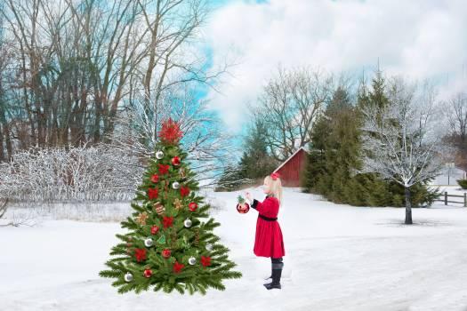 Christmas christmas tree cold december #68725