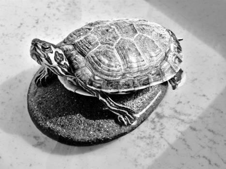 Animal creature meet the turtle reptile Free Photo