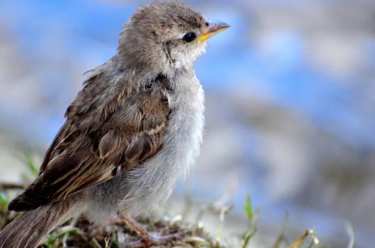 Animal bokeh sparrow Free Photo
