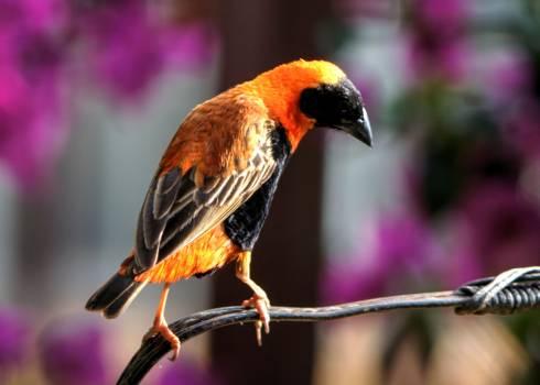 Bird finch garden nature Free Photo