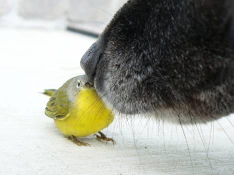 Animal bird dog dog nose Free Photo