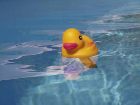 Bath duck holiday pool pool thermometer Free Photo