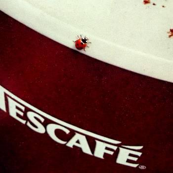 Coffee cup ladybird Free Photo