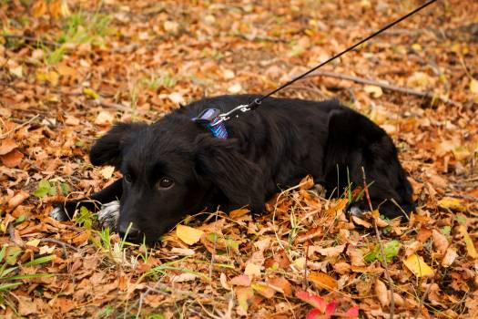 Autumn black puppy sadness #70202