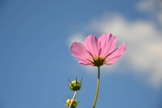Beautiful botanica bud closeup Free Photo
