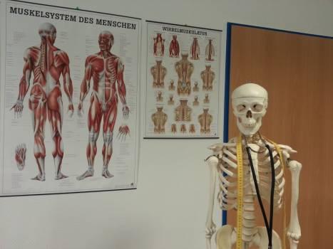 Anatomy bone bone structure doctor Free Photo