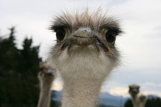 Animal bird camera contact #71708