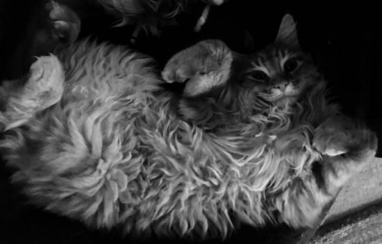 Cat cute animals furry ginger #71861