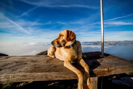 Canino dog mountain shopping cart Free Photo