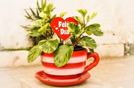 Cup flower flowerpot flowerpot garden gift Free Photo