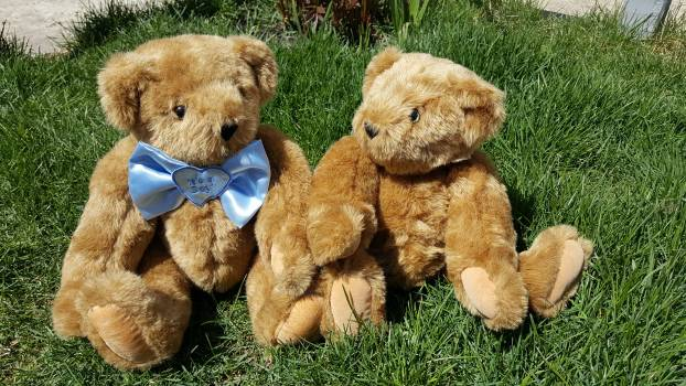 Bear couple gift outdoors #72806