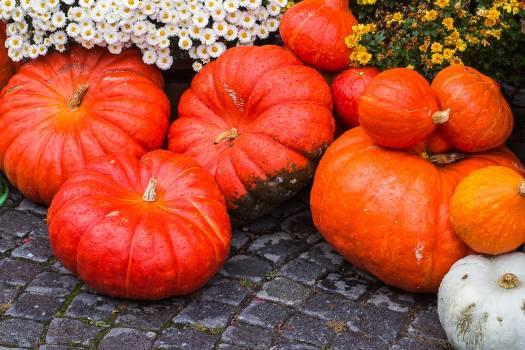 Autumn motives farm halloween pumpkin Free Photo