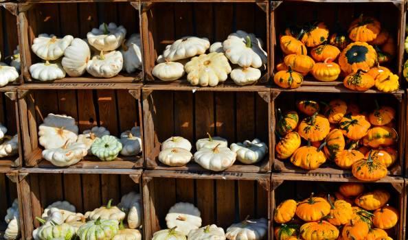 Autumn benefit from decoration farm Free Photo